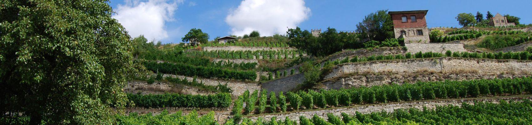 vineyear-gourmet-productos-vino-turismo-casas-rurales-cerca-de-bodegas-y-viñedos-productos-burgos-españa-productos